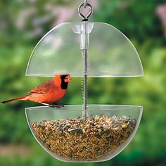 Squirrel-Free Bird Feeder