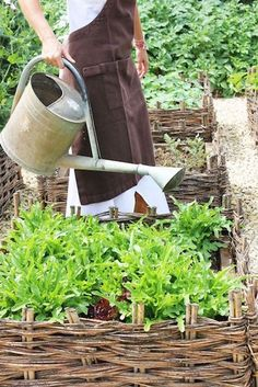 Much raised garden inspiration Potager Garden, Herb Garden, Vegetable Garden, Garden Plants, Garden Landscaping, Fenced Garden, Cerca Natural, Plantation, Edible Garden