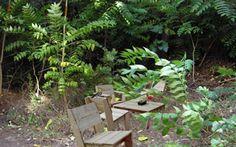 Οι 10 καλύτερες αυλές της Αττικής για ένα ποτό σε... πράσινο φόντο   Nightlife   click@Life Outdoor Furniture Sets, Outdoor Decor, Athens, Relax, Plants, Restaurants, Drink, Home Decor, Life