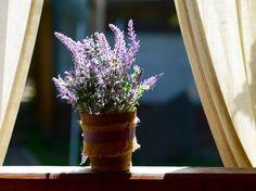 Diese Pflanzen helfen dir dabei, besser zu schlafen: Lavendel
