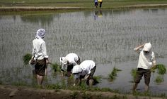 As per press release by Ministry of Agriculture, the total sown area as on 1stJuly, 2016 as per reports received from States, stands at 215.87 lakh hectare as compared to 279.27 lakh hectare at this time last year. With the picking up of monsoon in last few days the sowing will happen at faster pace. It is reported that rice has been sown/transplanted in 47.77 lakh ha, pulses in 19.85 lakh ha, coarse cereals in 37.15 lakh ha, oilseeds in 28.71 lakh ha, sugarcane in 44.38lakh hectare and…