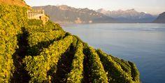 http://www.wineblogroll.com/2016/05/vigneti-in-italia-e-nel-mondo-la-grande.html