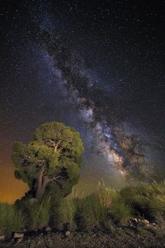 Magical Tree by Álvaro y Jose Manuel Pérez Alonso. Brothers  on 500px