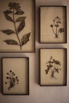 Nice herbiers!