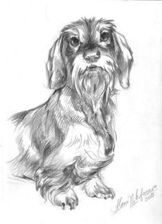 1000 images about my dachshund sketches on pinterest - Dessin teckel ...