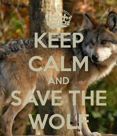 Keep calm and save the wolf.