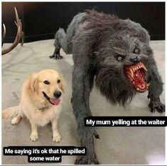 Relatable memes about life that are absolutely funny & accurate af. Funny Animal Memes, Funny Animal Pictures, Cute Funny Animals, Funny Cute, Funny Jokes, Hilarious, Mom Funny, Funny Stuff, Memes Humor