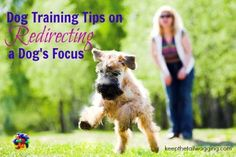 Dog Training Tips on Redirecting a Dog's Focus