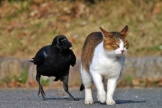 With crow