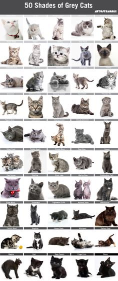 50 Shades of Grey Cats (Autostraddle)