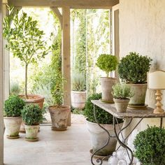 Roses and Rust: Indoor Plants - Yay or Nay
