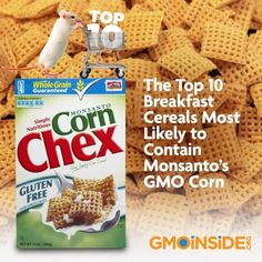 The Top 10 Breakfast Cereals Most Likely to Contain Monsanto's GMO Corn. More Here: http://gmoinside.org/news/the-top-10-breakfast-cereals-most-likely-to-contain-monsantos-gmo-corn/