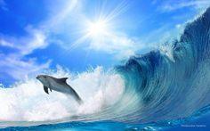 FRANQUICIA GUTTA. Delfín surfeando las olas