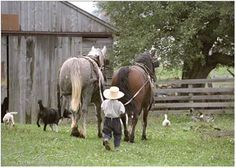 Young boy with work horses.
