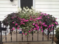 Results of the 2013 Window Box Contest Are In!