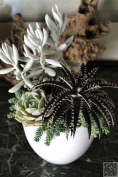 38. #Match - 43 Outstanding Succulent #Gardens You Can Create at Home ... → #Gardening #Succulent