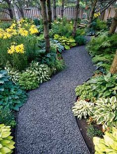 Gravel path. Fern, lily, hosta border.