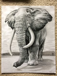 Drawing Bleistift Elefant 44 Ideas The post Drawing Bleistift Elefant 44 Ideas appeared fir Elephant Sketch, Elephant Love, Elephant Art, Elephant Tattoos, Pencil Drawings Of Animals, Animal Sketches, Art Drawings Sketches, Drawings Of Elephants, Cool Pencil Drawings