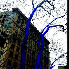 Seattle...the blue trees! We took a pic with these!