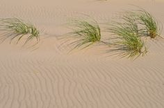 'Four Sisters' (Lake Michigan Beach)