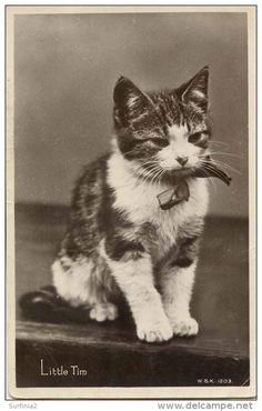 Cat Postcard. LITTLE TIM, 1931  Publisher: Wildt & Kray 1203. Divided back.