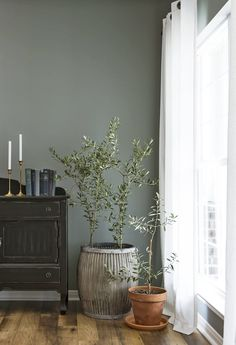 magnolia homes joanna gaines Watch out, fiddle leaf fig, and move over, banana tree! There's a new potted plant in town, and it's so on-trend even Fixer Upper design pro Joanna Gaines Decor, Room, Magnolia Homes, Interior, Natural Home Decor, Living Room Decor, Potted Olive Tree, House Interior, Living Decor