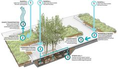 Streetscapes and plazas are being transformed into high performance sites for stormwater management.