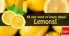 Did you know how beneficial can lemons be? You will be surprised to know the 5 point. http://www.drpaulsonline.com/blog/all-you-need-to-know-about-lemons/ #beauty #skincare #health #lemons