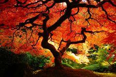 Een verzameling mooie herfstfoto's