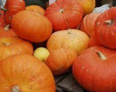 Pompoenen oogsten en bewaren. We zouden er eens wat meer van moeten eten! Groen.net - uw online tuinman
