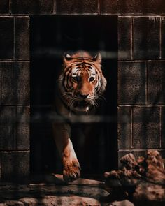 brown tiger photo – Free Animal Image on Unsplash Tiger Pictures, Funny Cat Pictures, Daily Pictures, Embrace Pet Insurance, Most Expensive Dog, Baby Tigers, Pet Fox, Dogs Golden Retriever, Animal Wallpaper