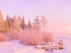 winter pink - Cerca con Google