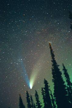 oecologia:  Comet Hale-Bopp(Alaska) byDavid Cartier.