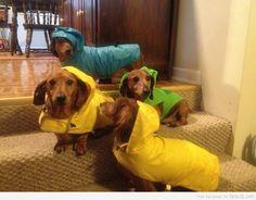 I protect my wieners  Cute!