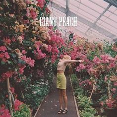 Wolf Alice - Giant Peach