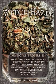 gotta love the herbal magic of witch hazel xo Magic Herbs, Herbal Magic, Mending A Broken Heart, Witch Herbs, Hedge Witch, Healing Herbs, Healing Spells, Witch Hazel, Book Of Shadows