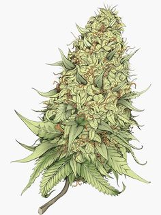 Buy 'Cannabid Bud' by KushDesigns as a Sticker, Transparent Sticker, or Glossy Sticker Marijuana Plants, Weed Buds, Stoner Art, Weed Art, Abstract Styles, Psychedelic Art, Stickers, Medical Marijuana, Small Tattoos