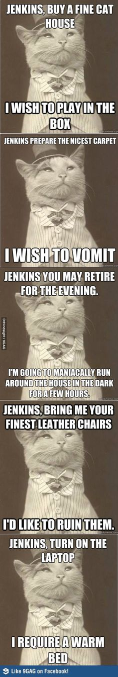 It's time for Aristocat.