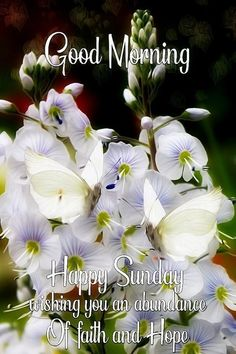 Good Morning Sunday Pictures, Good Morning God Quotes, Good Morning Happy Sunday, Good Morning Images Flowers, Good Morning Messages, Good Morning Good Night, Sunday Quotes, Afternoon Quotes, Weekday Quotes