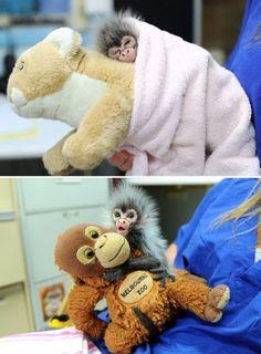 baby monkeys!