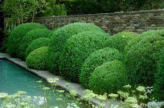 cloud pruning