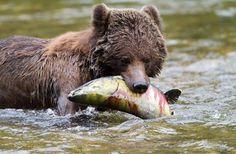 Best Canadian Wilderness Lodges; Great Bear Lodge #4