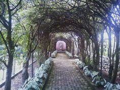 Gardens in Winchester VA