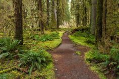 Hoh River Trail to Five Mile Island, Olympic National Park, WA