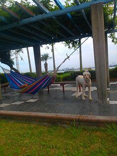 But I don't like hammock! 2017 7.10