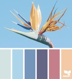 ❤ =^..^= ❤ Color Flora via @designseeds