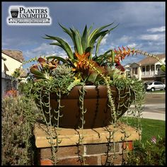 The Balboa Low Bowl Planter is a medium-sized commercial planter with a round footprint and a subtle trim. The round fiberglass planter has a classic look. Contemporary Planters, Modern Planters, Large Planters, Container Plants, Container Gardening, Planting Vines, Commercial Planters, Fiberglass Planters, Garden Boxes