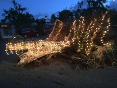 Someone decorated a fallen tree with Christmas lights