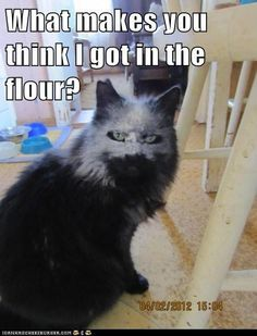 Bahahahaha!!!  Reminds me of Griffin, looks just like him(w/o the flour).