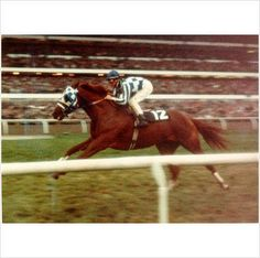 Famous race horse of all time his name is Secretariat All The Pretty Horses, Beautiful Horses, Animals Beautiful, The Great Race, Triple Crown Winners, Sport Of Kings, Thoroughbred Horse, Horse World, Racehorse